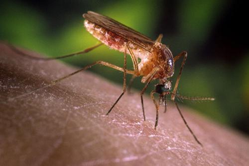 mosquitoes flies control